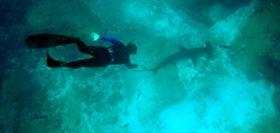 estudio-comportamiento-tiburones-en-mexico-mauricio-hoyos-james-ketchum-025-02