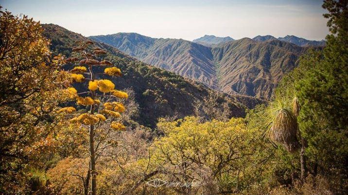 Sierra de la Laguna, La Paz, Baja California Sur