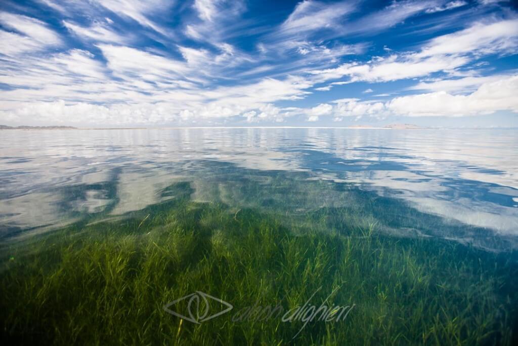 la-gran-bahía-magdalena-025-04