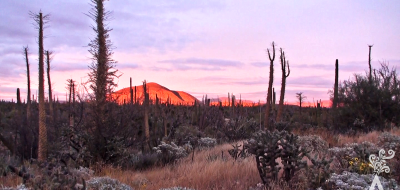 un-viaje-a-la-media-península-baja-california-025-04