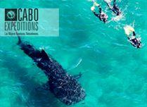 tendencia-el-arte-de-viajar-actividades-cabo-san-lucas-cabo-expeditions