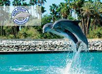 tendencia-el-arte-de-viajar--actividades-en-san-jose-del-cabo-dolphin-discovery